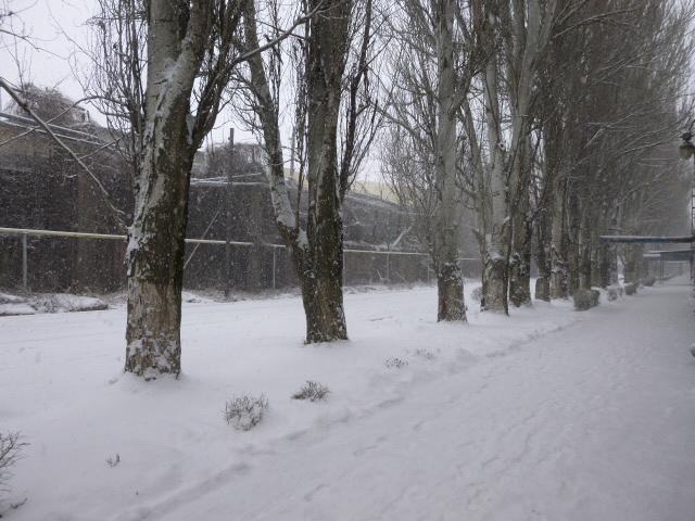 Снег в Таганроге аллея на территории завода Красный Гидропресс