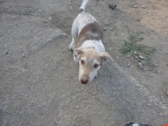 Беспризорные собаки в Таганроге