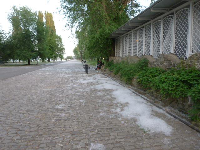 Тополиный пух в Таганроге