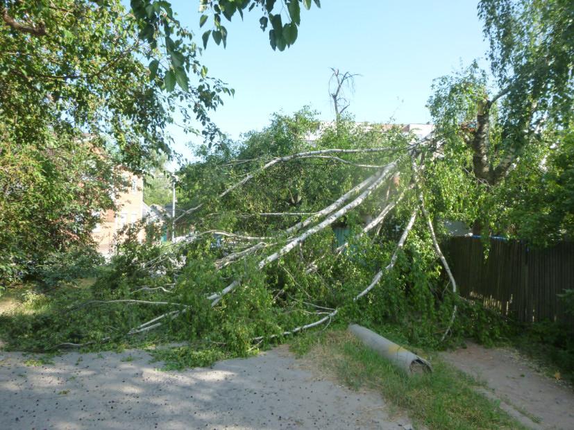 Дерево рухнуло в Таганроге фото