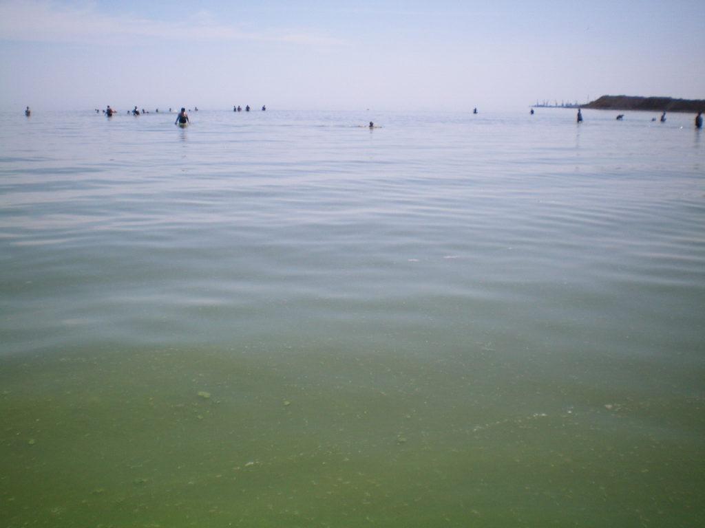 Море цветет Таганрог