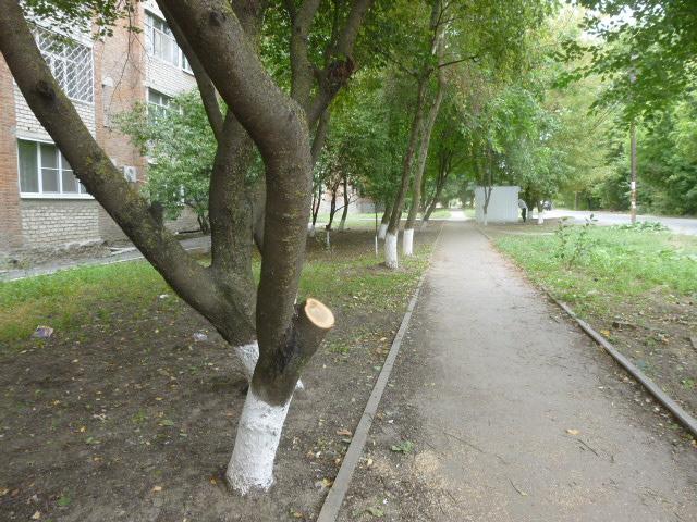 Обрезка деревьев по Таганрогски
