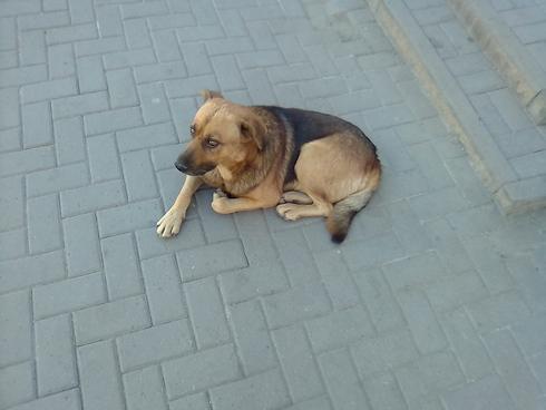 О бродячих псах