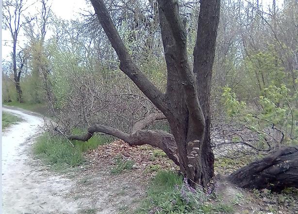 Ветер ломал деревья в Таганроге