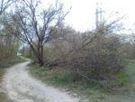 Сильнейший ветер в Таганроге — апокалипсис в апреле