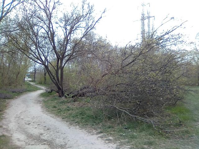 Сильнейший ветер в Таганроге ломал деревья