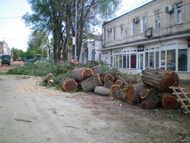 Улица Петровская в Таганроге вырубка деревьев