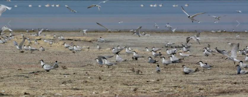 В акватории Азова погибли птицы