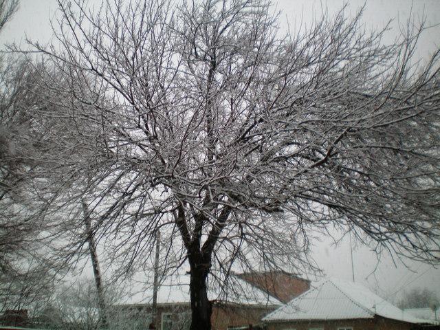 Деревья в снегу Таганрог 23 марта 2021 года