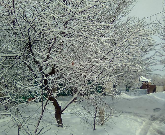 Снег выпал в городе Таганрог