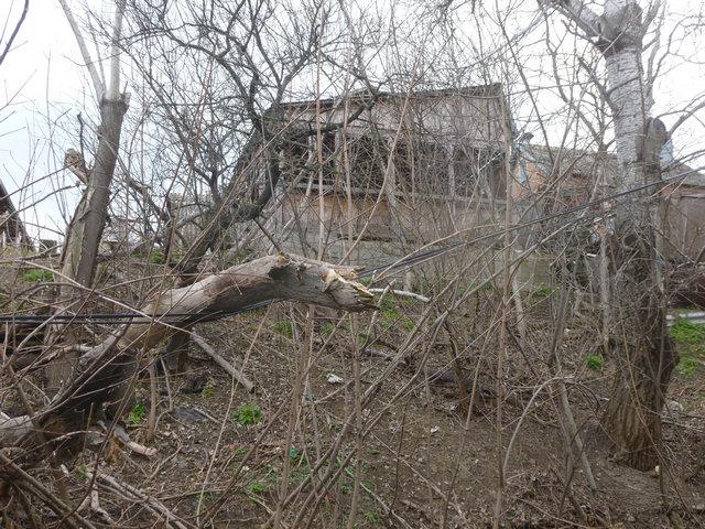 Отключение электроэнергии в Таганроге вязано с подрезкой деревьев
